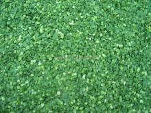 Зеленый  лук   IQF  ( нарезанный   кубиками / нарезанный   кубиками ) ,Замороженный зеленый  лук ( нарезанный   кубиками / нарезанный   кубиками )