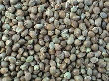 Bird Feeds/ Hemp Seeds, Chinese Origin