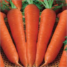 FRESH SOUTH AFRICA CARROT