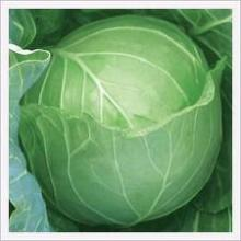 HIGHLY FRESH SOUTH AFRICA CABBAGE