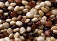 Quinoa  Powder,  Quinoa   Seed  Powder, Organic