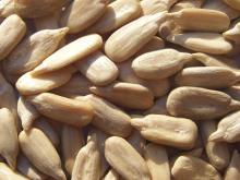 Chinese Sunflower Kernel Confectionery Grade