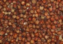 red sorghum seeds