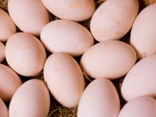 Table Eggs, Quail Eggs , Ostrich Eggs