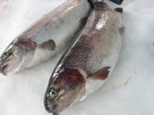 Frozen  Cod   Fish , Frozen  cod   fish  fillet