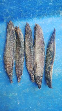 Dried Fish Tuna - Maldives Dry Skipjack