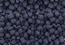 IQF  Frozen  Blackberry   whole s