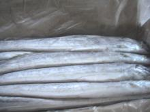 ribbonfish W/R