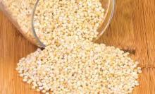white sorghum