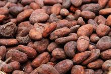 Best Quality Dried Cocoa Beans for sale