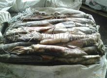 Peru  squid