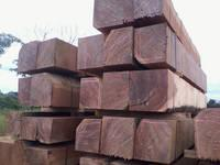 Ayous timber logs