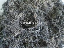 Gracilaria seaweed