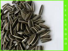 2013 Inner Mongolia Sunflower Seeds, Chinese Supplier