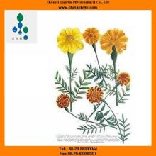 Lutein   ester s-Herbal extract-factory