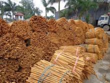 cinnamon stick and powder for sale