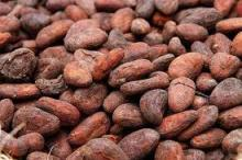 High Grade Dried Cameroon Raw Cocoa Beans for Sale