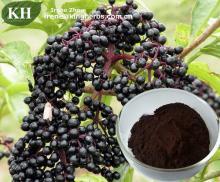 Elderberry Extract Anthocyanidins 3% to 25% by UV, 4: 1 10: 1