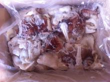 Frolzen Giant Squid Neck
