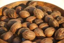high quality Pecan nuts