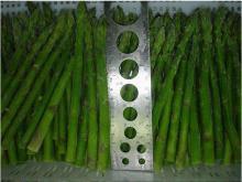 IQF asparagus(green)