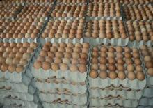 Fresh White & Brown Chicken Eggs