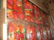 Fresh Starwberry