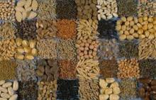Sunflower Seeds,Sesame Seeds,Flax Seed,Cotton Seeds,Castor Seeds,Rape Seeds,Jatropha Seeds,Canola Se