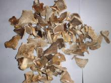 Dried Pleurotus
