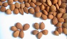 Almond/Apricot Kernel with High Quality