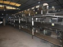 Fruit production linepiece of fruitpowder isfully  automatic , semi - automatic , high efficiency, high yi