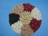 Black,Red,Speckled and White Kidney Beans