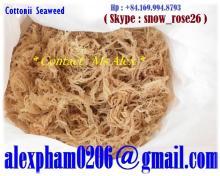 White Cottonii Seaweed