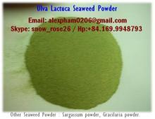ULVA LACTUCA SEAWEED POWDER