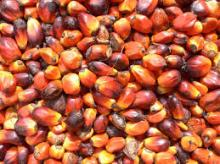 PALM OIL REFINED AND CRUDE