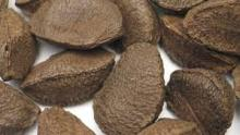 Brazil Nuts Shelled