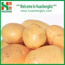 China fresh potatoes for exporting