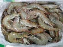 Frozen Shrimp And Seafoods