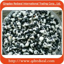 Coated Black Soybean