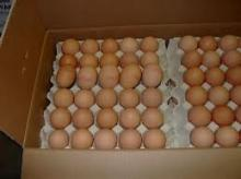 Dutch Fresh Eggs