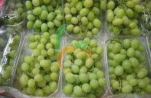 seedless Superior Grapes