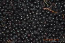 Aronia berry ORGANIC frozen, wholesale amounts