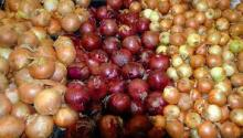White, Red and Yellow Onions