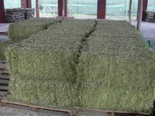 Top Quality Alfafa Hay Sales / Grade A