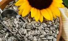 sunflower kernels confectionery grade