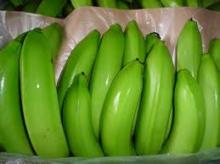 FINE CAVENDISH BANANA