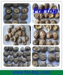 Varieties of New Crop Dried Shiitake Mushroom for British