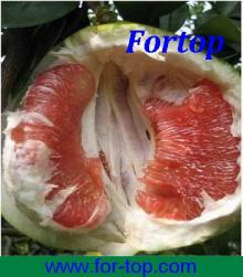 Fresh Honey Pomelo Fruit
