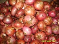 fresh onion (red onion)