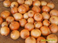 fresh onion (yellow onion)